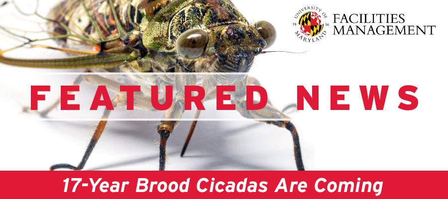 Link to Cicada Article