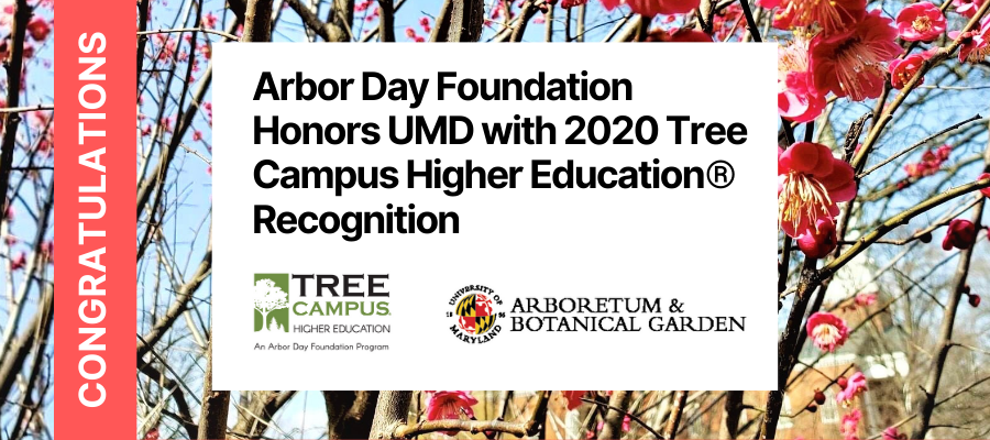 Arbor Day Foundation Honors UMD Campus